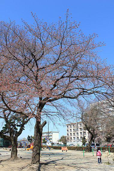 4月8日高崎公園。