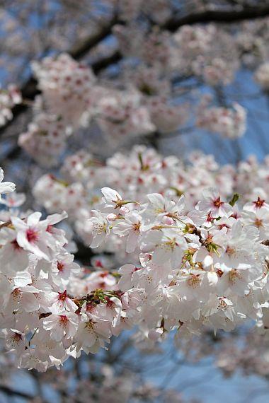 4月15日。浜川公園。