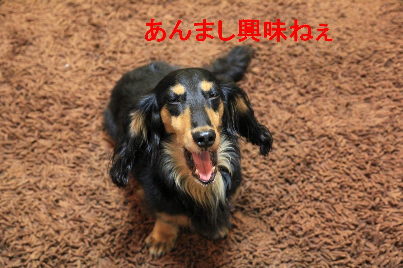 YUTA101006-2.jpg