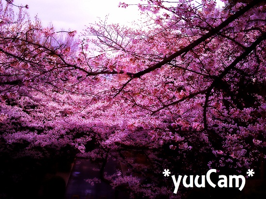 vivi2012040607.jpg