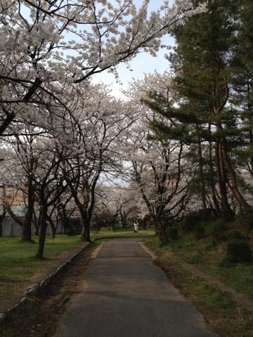 sakura gosen1