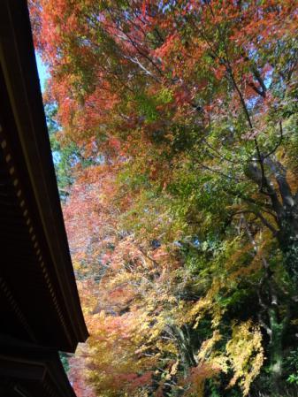 2012.11.22大宰府2