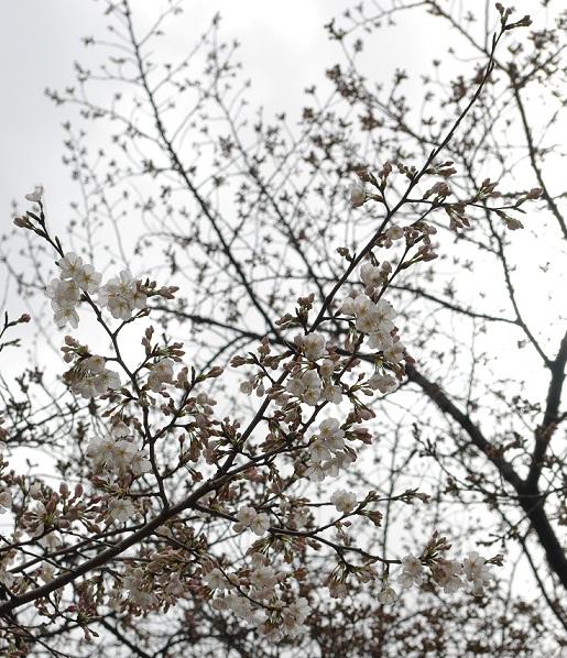 20100322_blo2.jpg