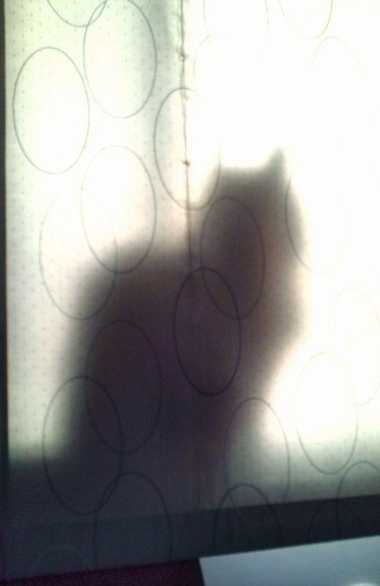 朝の窓辺のおたま