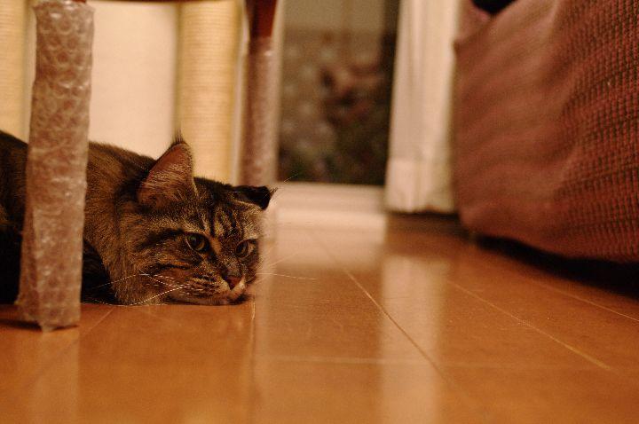 20110103_blog2s.jpg