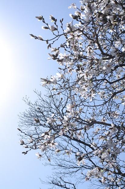 20110328_blog3s.jpg