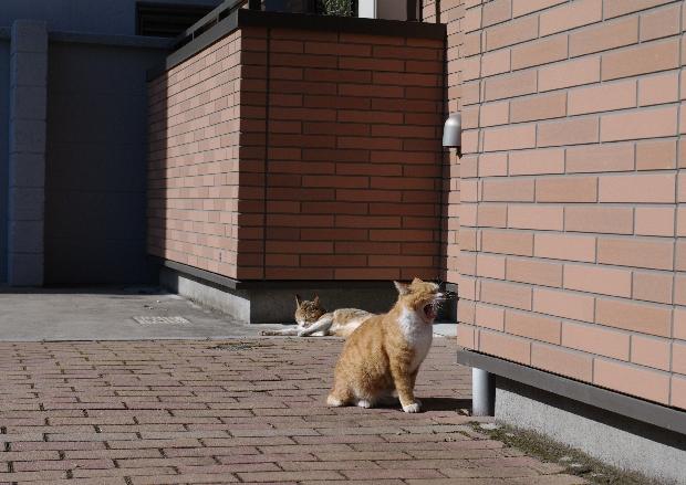 20110409_blog11s.jpg
