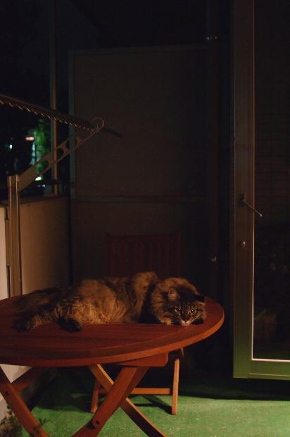 20110810_blog1s.jpg