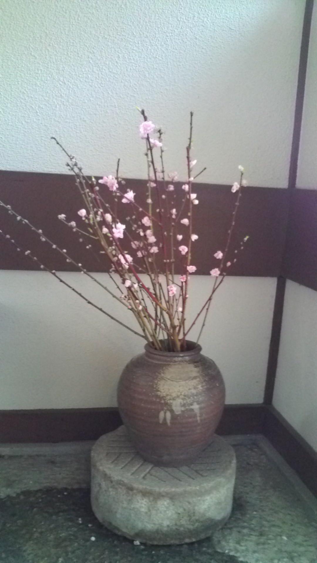 茶室の入り口の桃の花