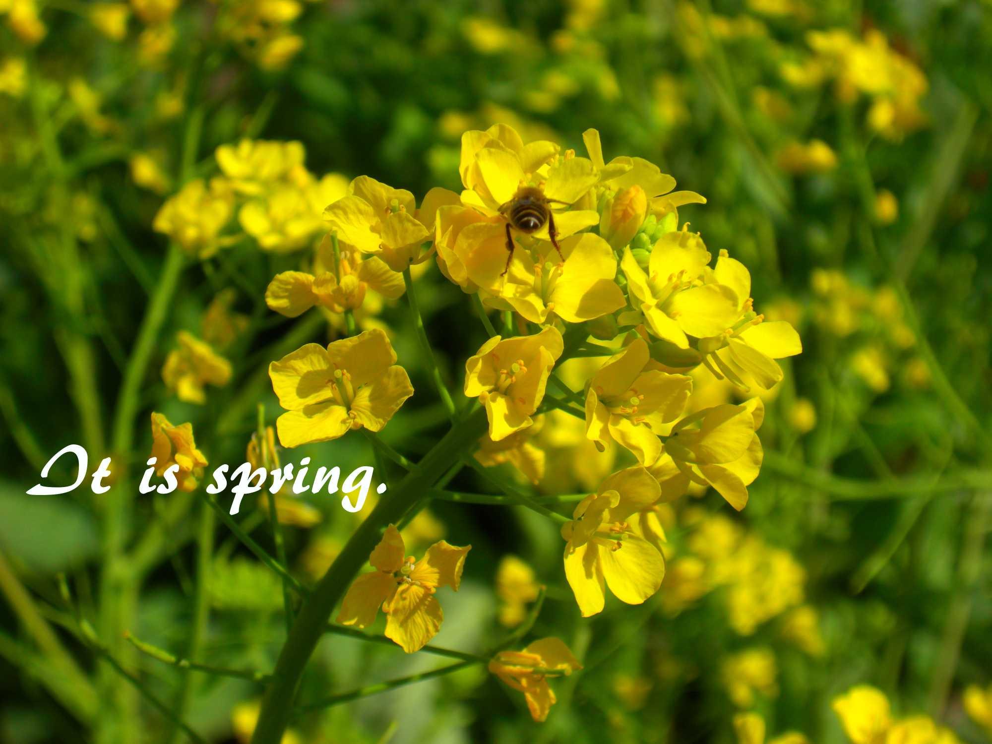 春ですね1