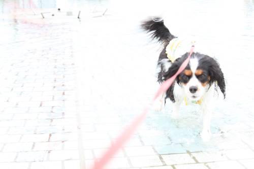 yuzu水遊び2