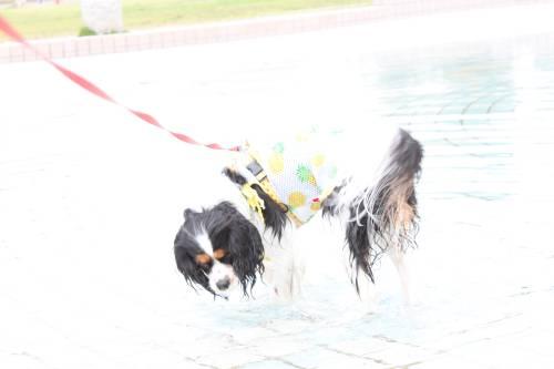 yuzu水遊び1