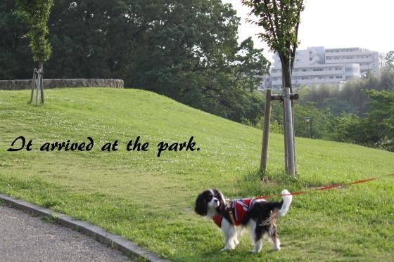 お池の公園0