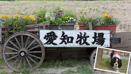 愛知牧場1