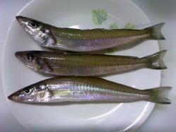 キス釣り2-20120317