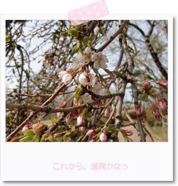 [photo19191063]CIMG1362_R