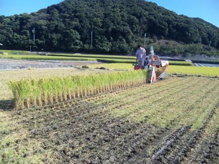 稲刈り02
