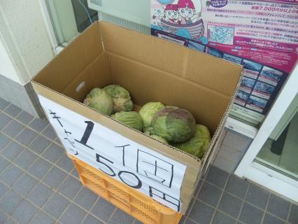 キャベツ1個50円