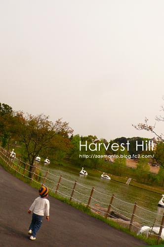 harvesthill.jpg