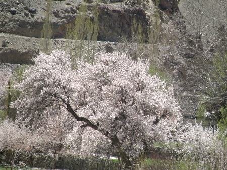 2011 anzu ohanami (44) (450x338)