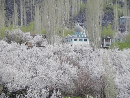 anzu ohanami 2011 (160)