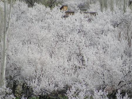 anzu ohanami 2011 (163)