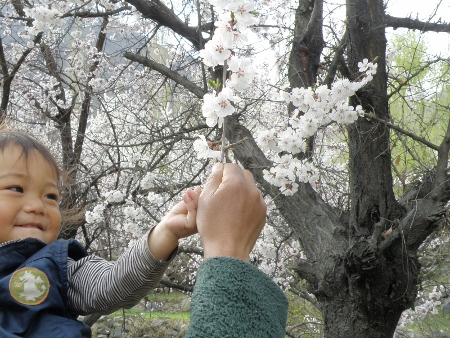 anzu ohanami 2011 (258)
