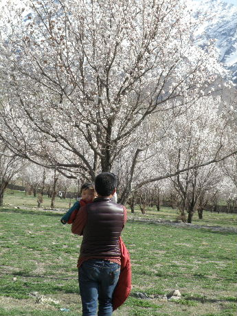 2013 22 to 25 Apr Kargil Apricot (158)