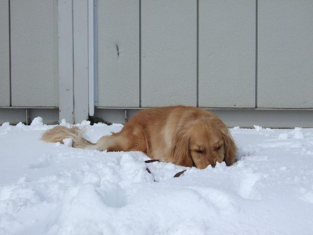 雪を食べる1