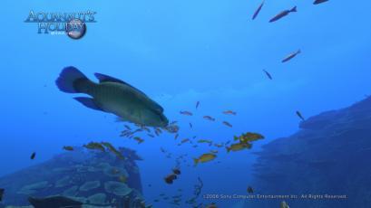 AquaPhoto 静かの海にて撮影7