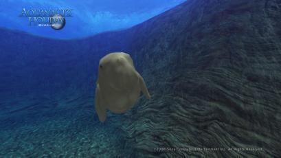 AquaPhoto トゥナの隠れ家にて撮影5