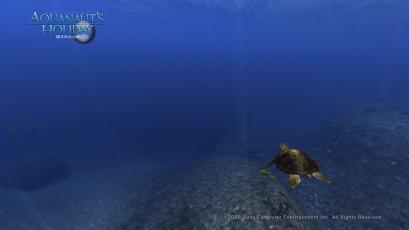 AquaPhoto しらべの海にて撮影