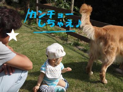 032_convert_20101012092158[1]