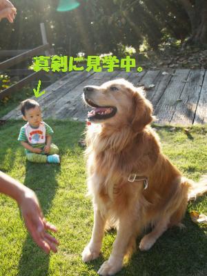 082_convert_20101017140807[1]