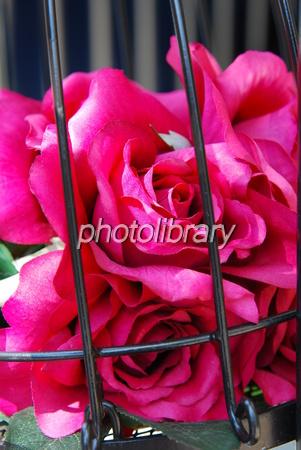 818094 かごの中の薔薇