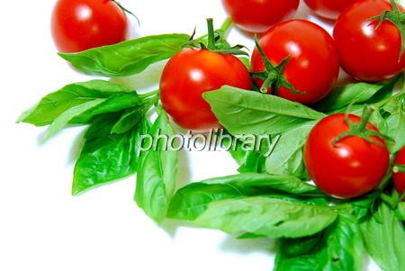 879495 トマトとバジル