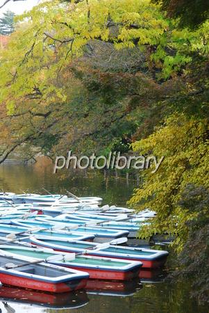 1071923 井の頭公園ボート