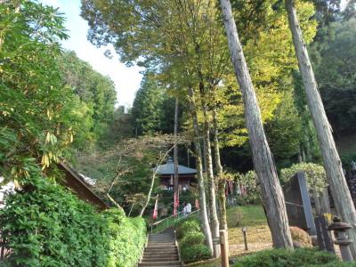 photo_titibufudasyo_2_46_2014_1025.jpg