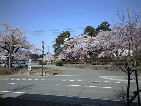 bokosakura480.jpg