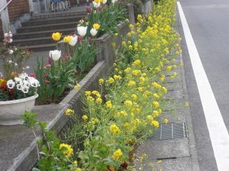 娘の園前の花壇