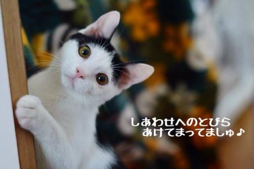 fc2blog_20141203145458b61.jpg