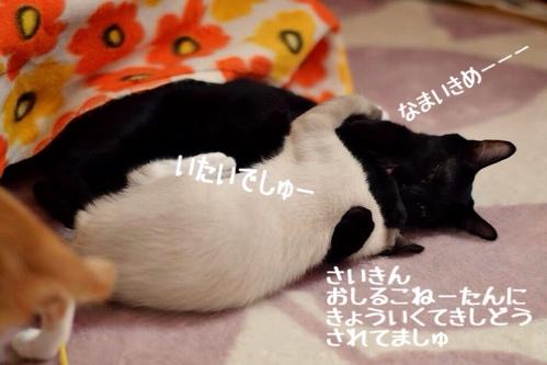 fc2blog_201412031519279a7.jpg