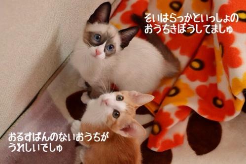 fc2blog_2014120315233439a.jpg
