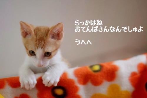 fc2blog_20141207124802168.jpg