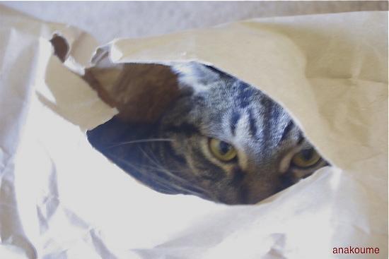 紙袋で無敵!1