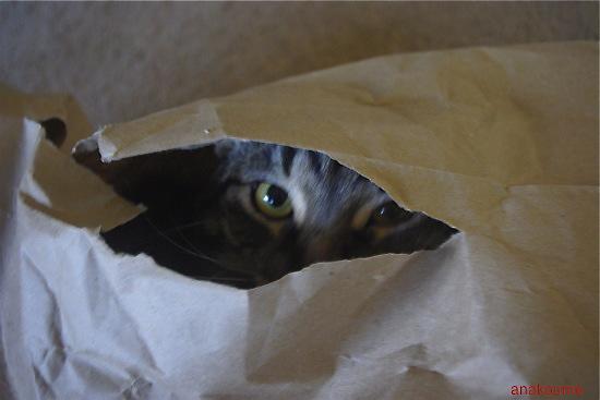 紙袋で無敵!4