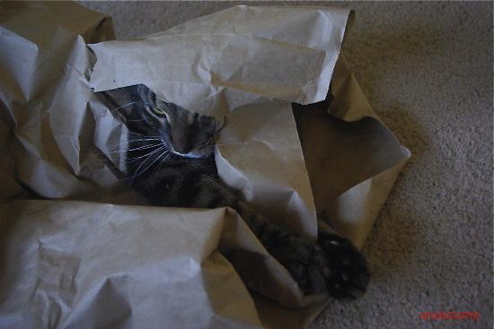 紙袋で無敵!5