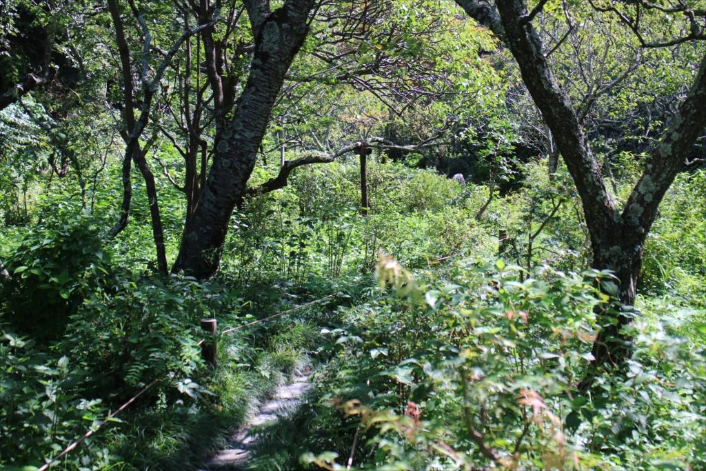 樹木に付いた苔がすごい_1