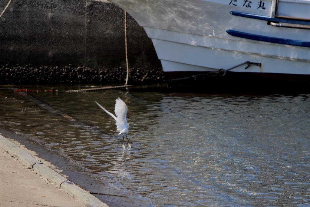 小魚にフェイントをかけているのだろうか?_2