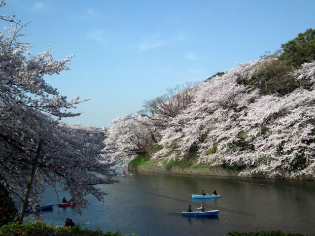 皇居・千鳥ヶ淵の桜(1)